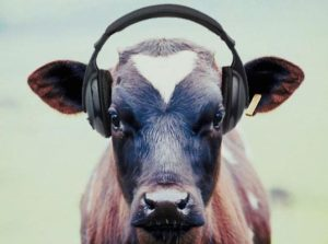 cow listening to trance music