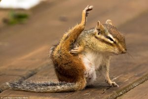 chipmunk yoga