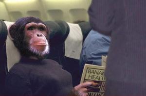 monkey in plane